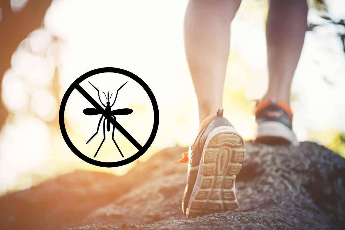 Moskitoschutz - was tun gegen mücken